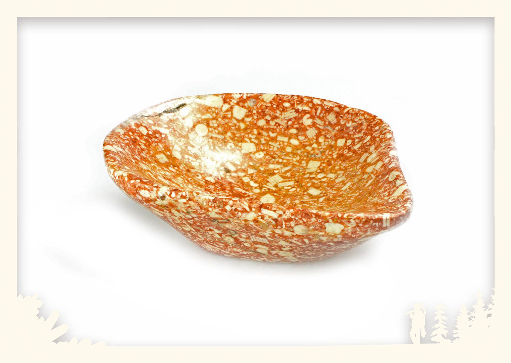 Steinschale Kalk Crinoiden Image